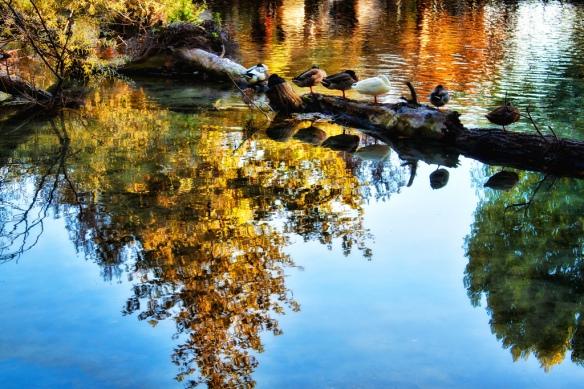 Reflection-Theophilos_Papadopoulos.jpg